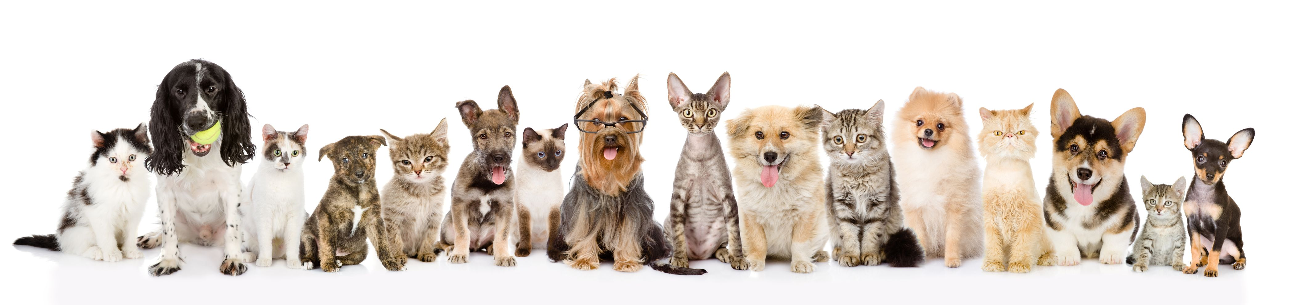 should you get pet insurance being pawsitive